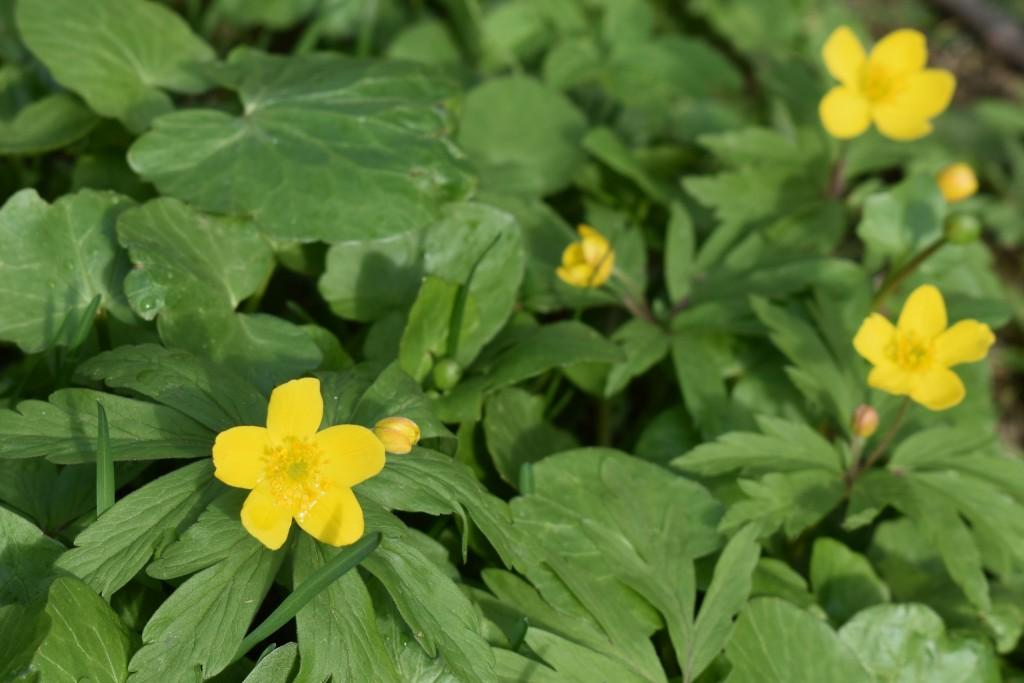 Апрельские цветы в городе 09