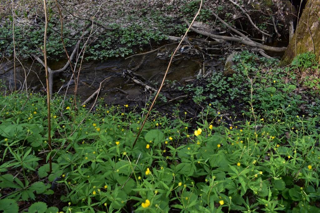 Река Лыбедь в апреле и мае 04