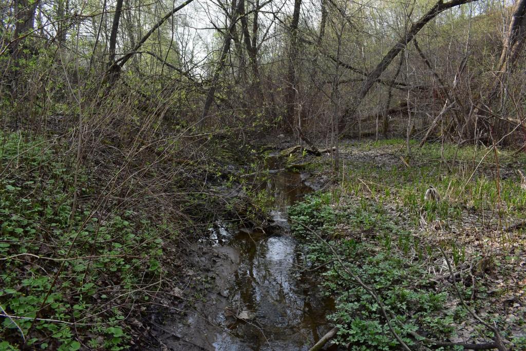 Река Лыбедь в апреле и мае 06