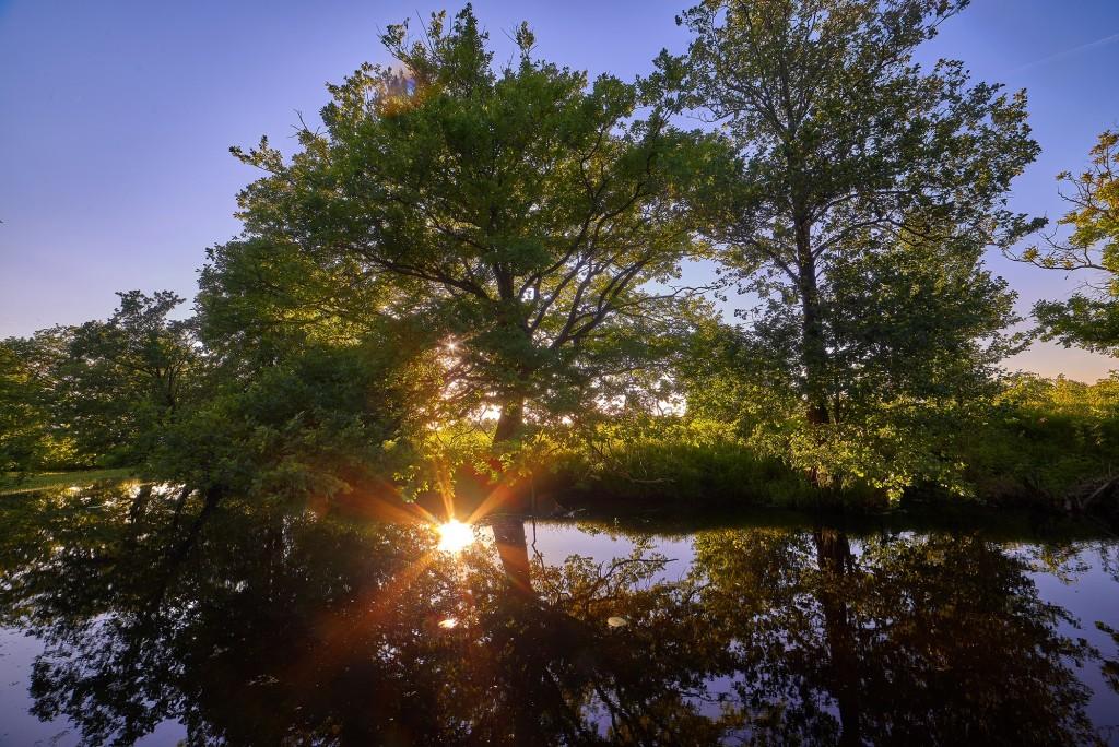 В вечернем свете... ( Владимир, загородный парк, июнь 2018 ) 05