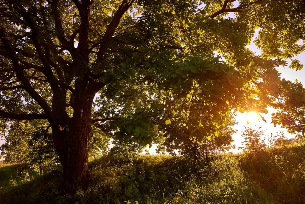 В вечернем свете... ( Владимир, загородный парк, июнь 2018 ) 07