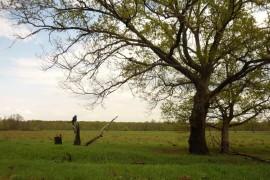 В пойме реки Клязьма