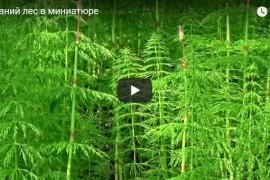 Древний лес в миниатюре