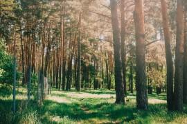 Муром, Вербовский