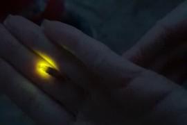 Очень большой светлячок найденнный в Муроме