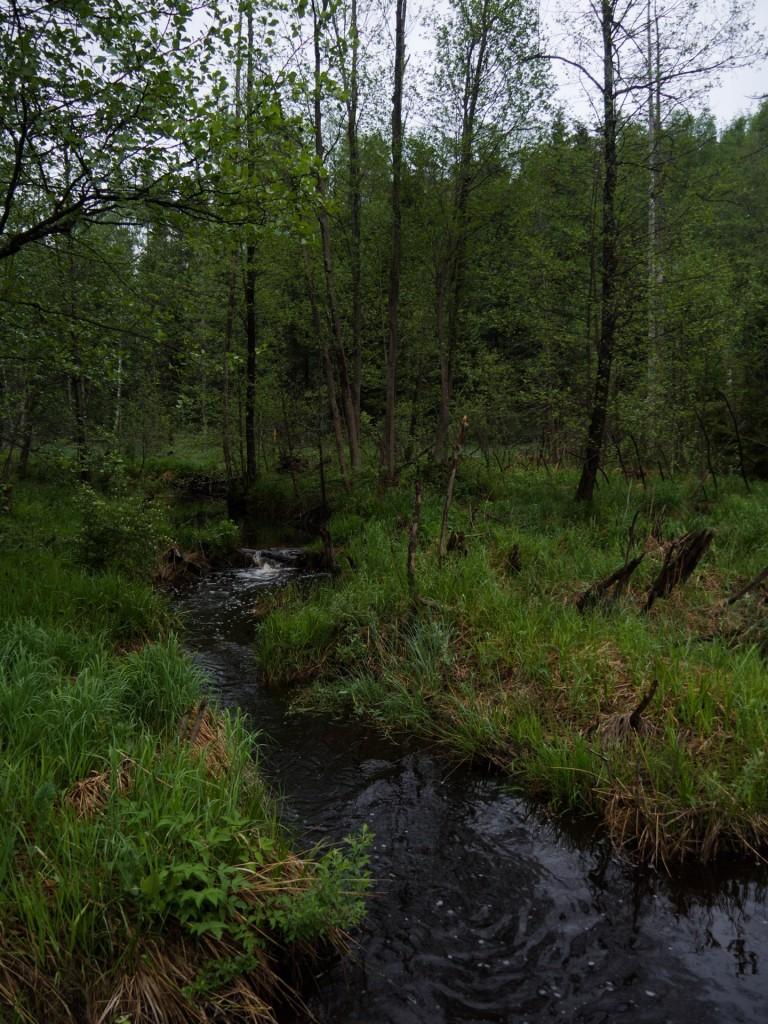 Небольшая речка Кумошенка, пересекающая Киржачский тракт