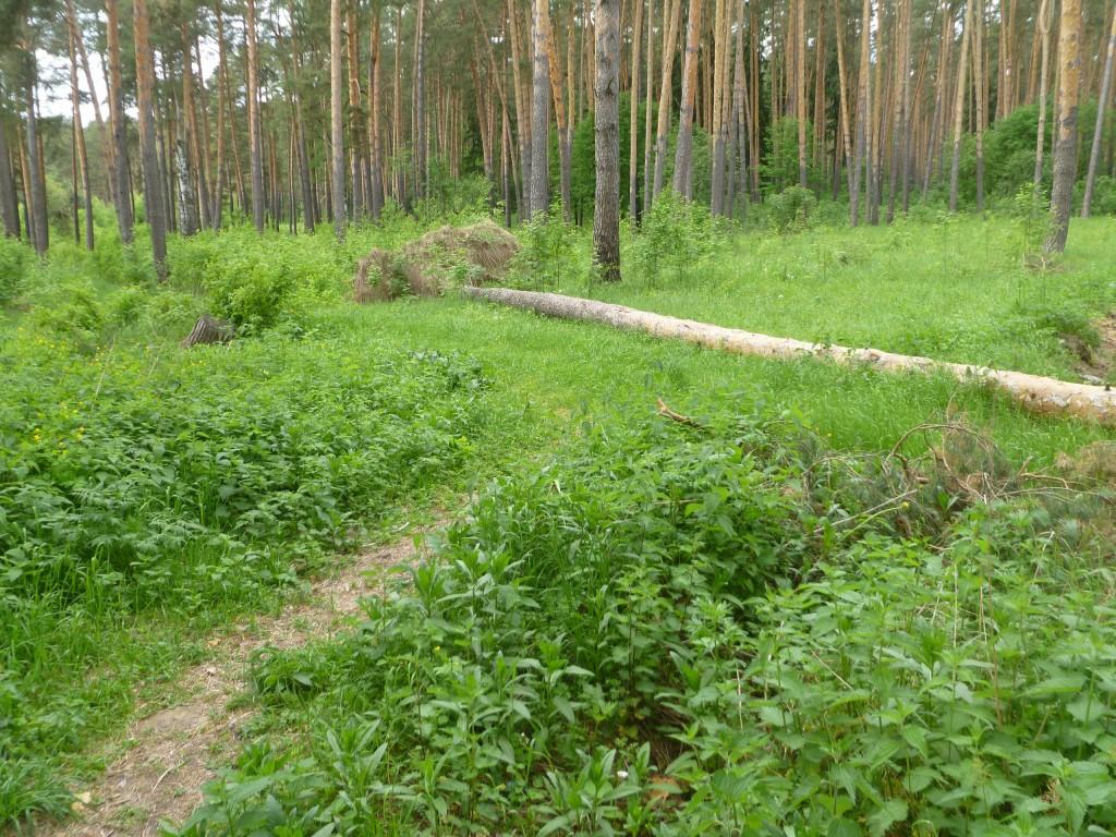 Последствия шквала 30 мая Владимирская область в лесном массиве около г.Судогда микрорайон Посадка. 09