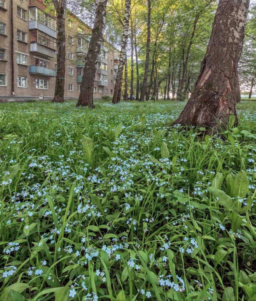 Утро в Александрове 22.05.2018 01
