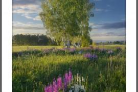 Эти чудесные полевые цветы… Вязниковский р-он, г. Вязники