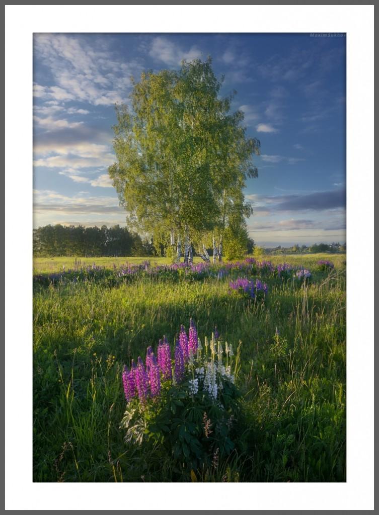 Эти чудесные полевые цветы... Вязниковский р-он, г. Вязники