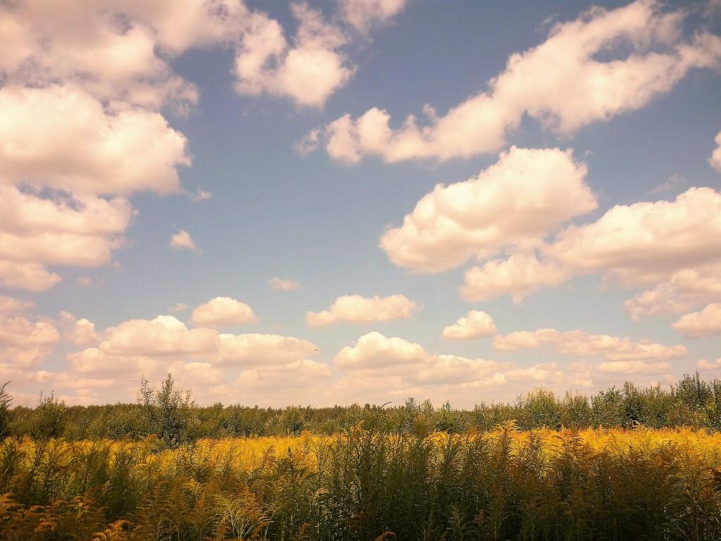 В полях под Новой Быковкой