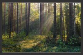 Июльские лесные сюжеты. Владимирская область, Вязниковский район