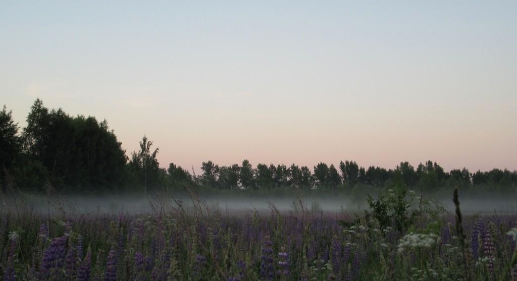 Раннее июльское утро во Владимирской области
