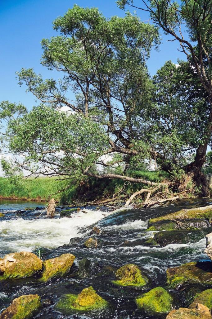 Река Судогда в районе деревни Лаврово 05