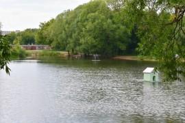 Соловьиный пруд во Владимире с карасями