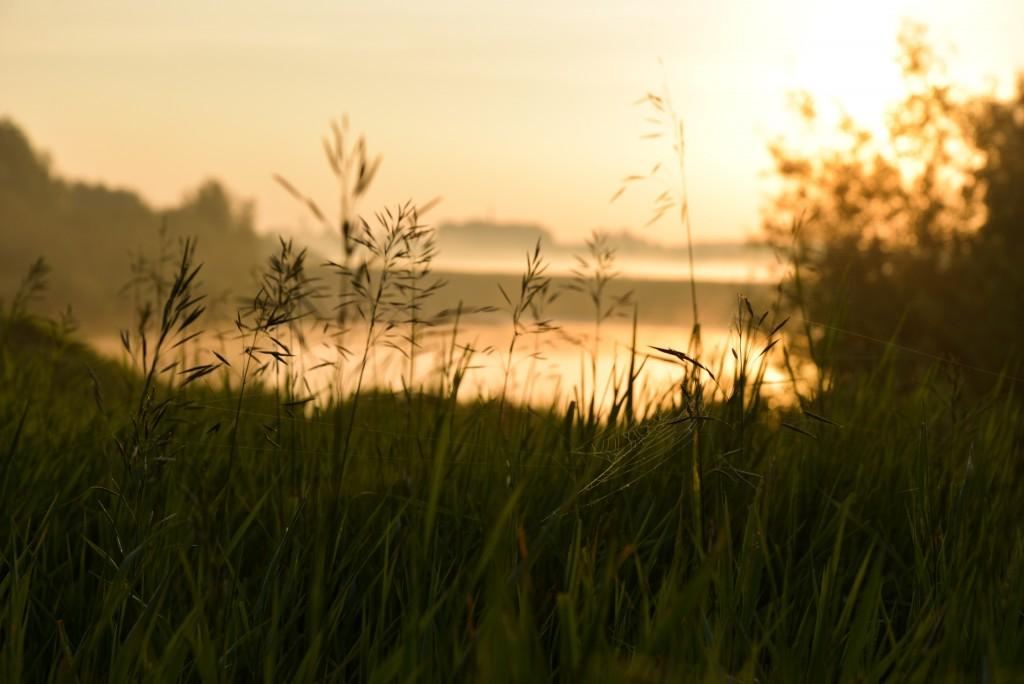 Утренняя выходка к церкви Покрова-на-Нерли и к стрелке рек Нерль и Клязьма 06