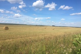 Ковровский район, стога сена