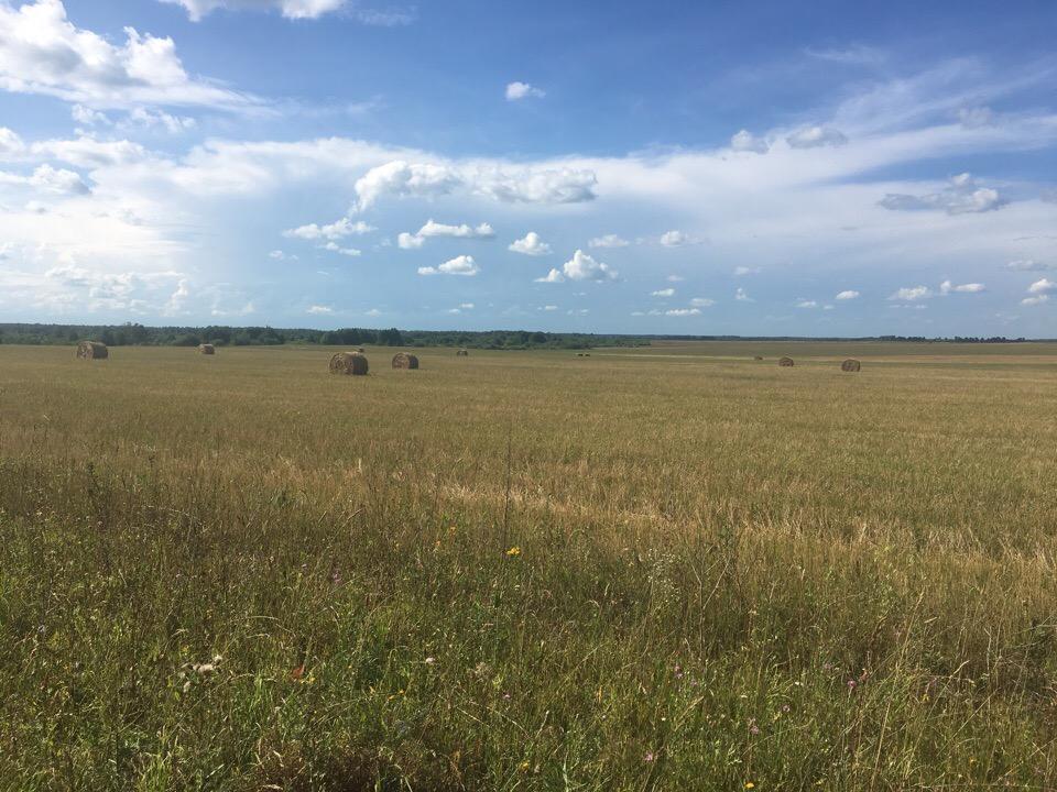 Ковровский район, стога сена 03