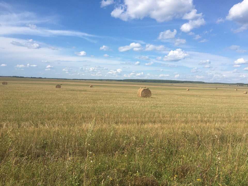 Ковровский район, стога сена 04