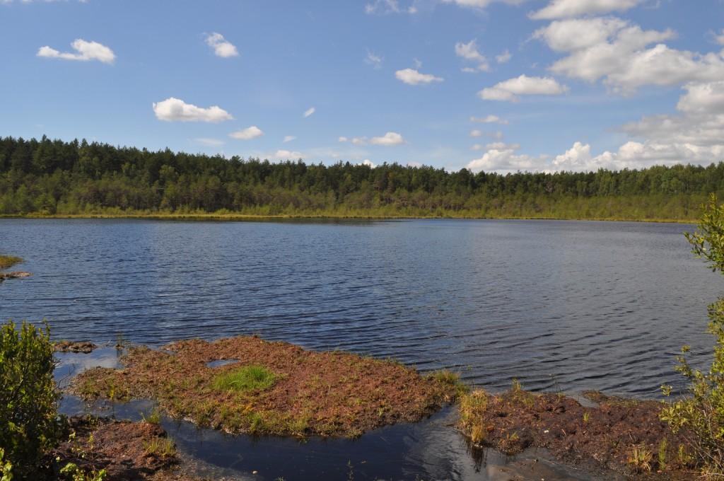 Озеро Плавучее, пос. Мостострой 01