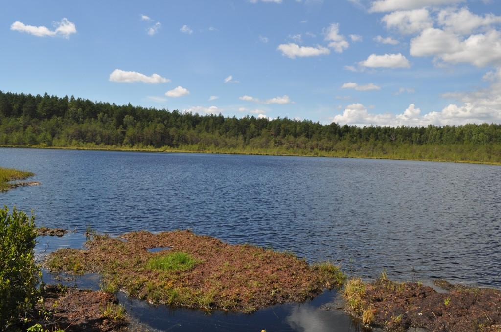 Озеро Плавучее, пос. Мостострой 05