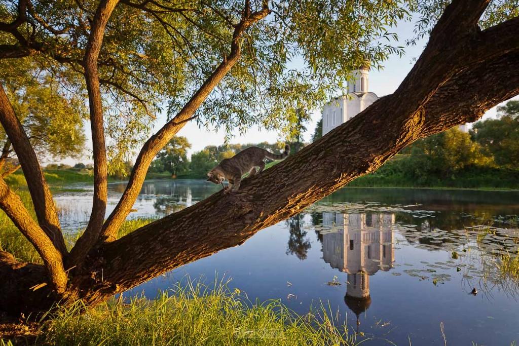 Рассвет в Боголюбово (2018_08_09) 07