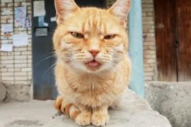 Кот подъездный