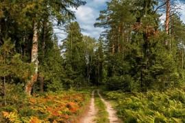 Лесная дорожка (Ковровский р-он)