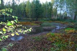 Осенний лес под Владимиром