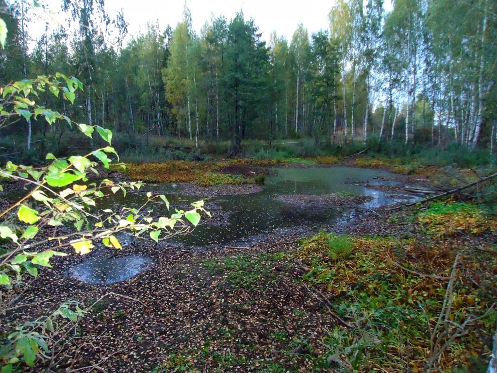 Осенний лес под Владимиром 01