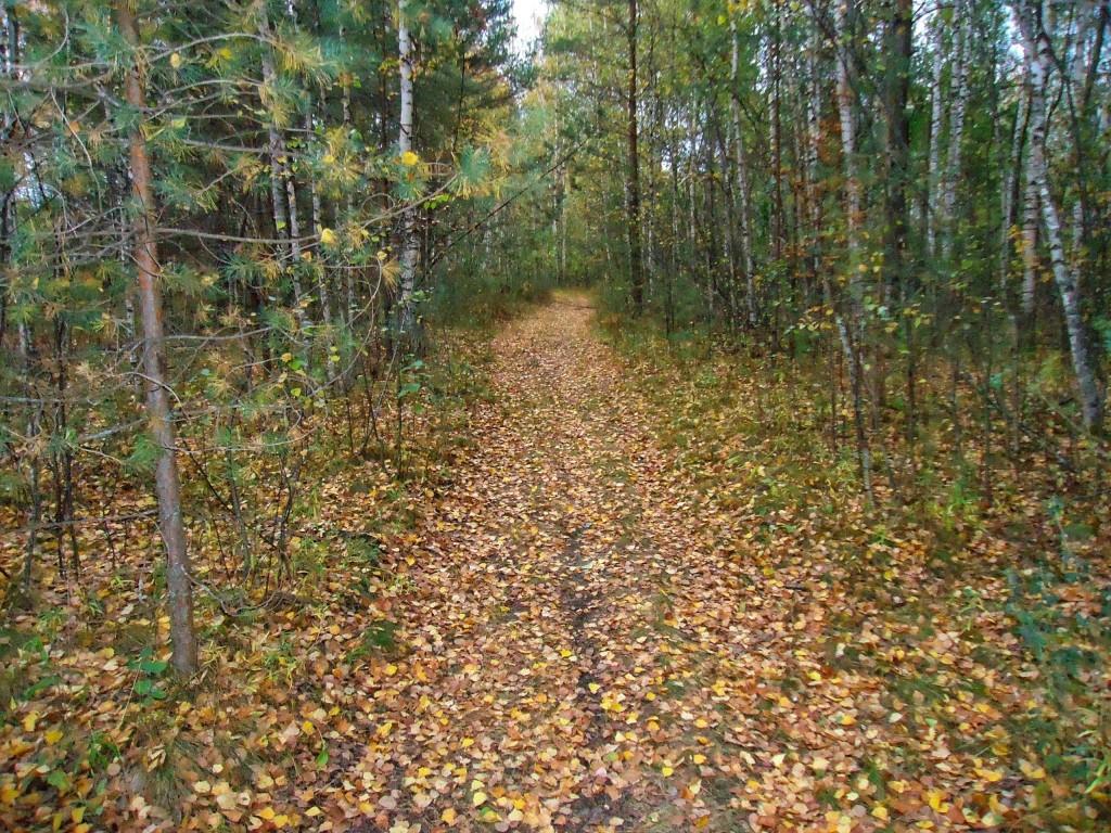 Осенний лес под Владимиром 02