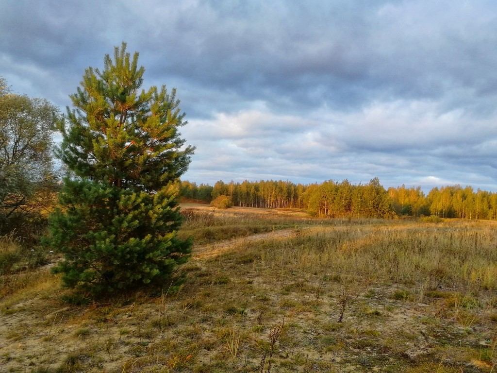 Осенний лес под Владимиром 03