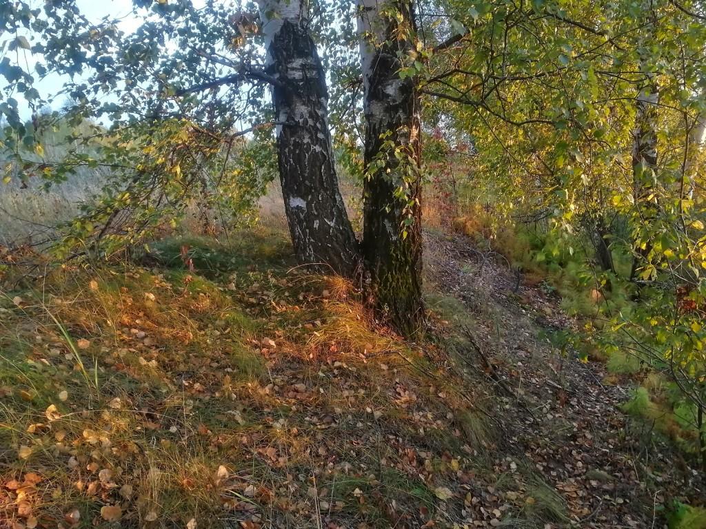Осенний лес под Владимиром 04