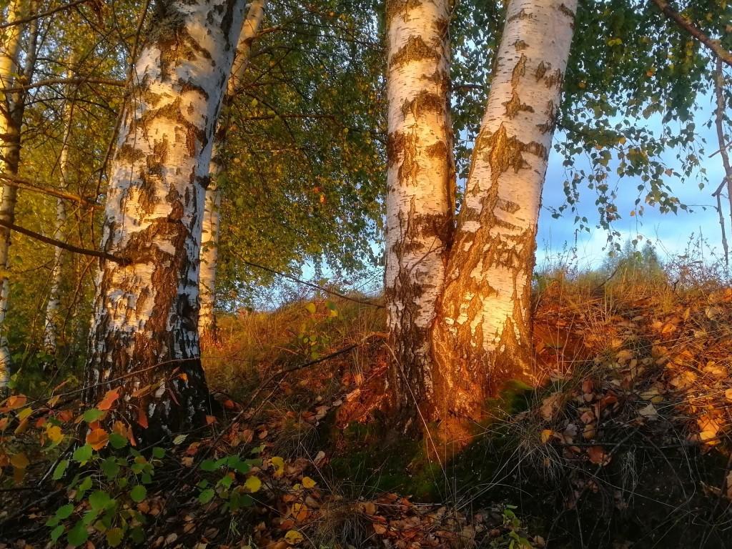 Осенний лес под Владимиром 05