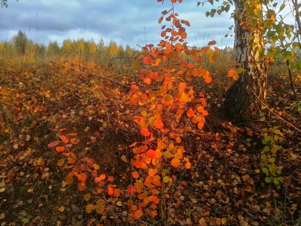 Осенний лес под Владимиром 06