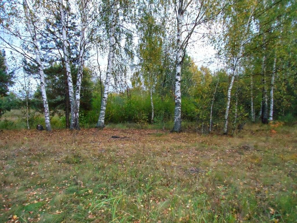 Осенний лес под Владимиром 07