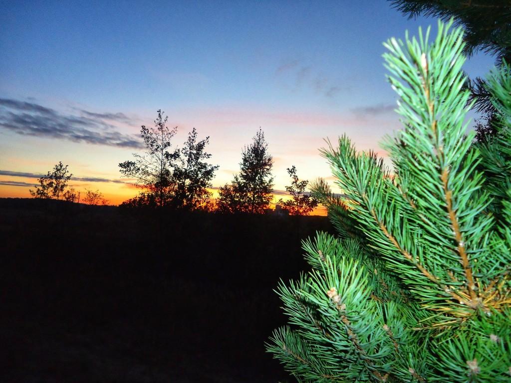 Осенний лес под Владимиром 08