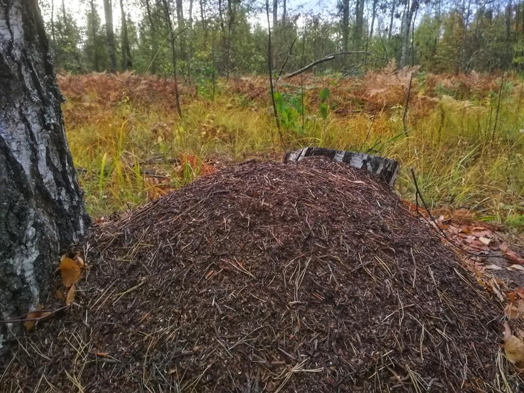 Осенний лес под Владимиром 09
