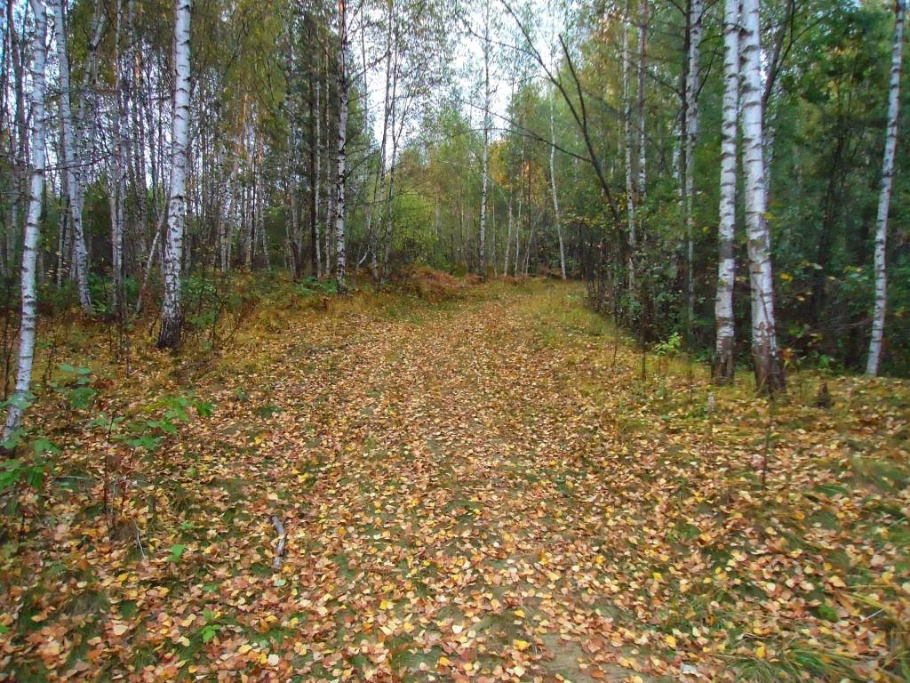 Осенний лес под Владимиром 10