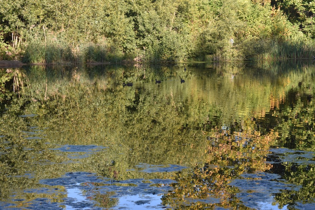 Пруды на реке Лыбедь 02