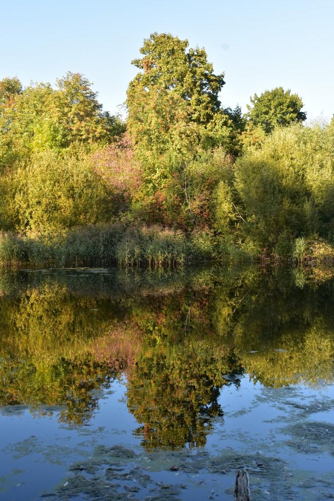 Пруды на реке Лыбедь 03