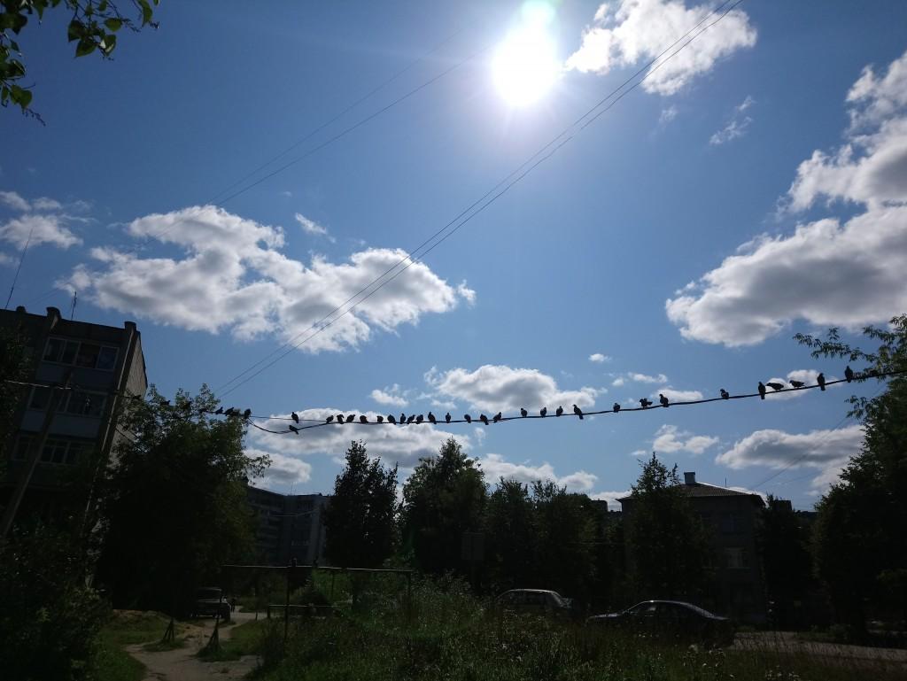 Птички, птички и небо 01