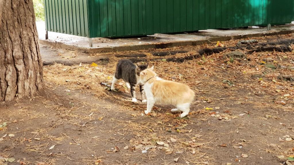 Разборки Вербовских котов