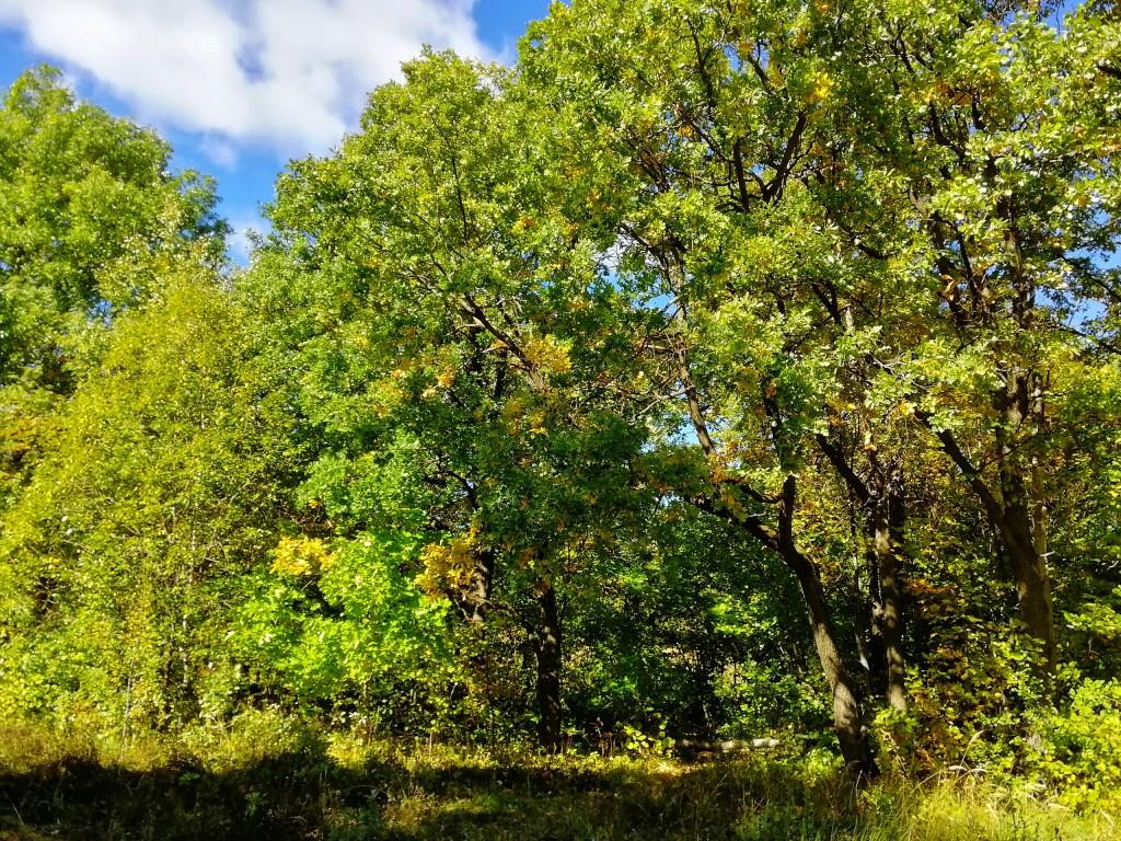 Солнечный денёк в лесопарке Дружба в конце сентября 05