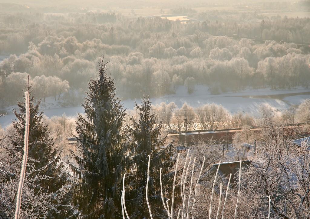 Владимир, мороз подарил удивительные картины. 07
