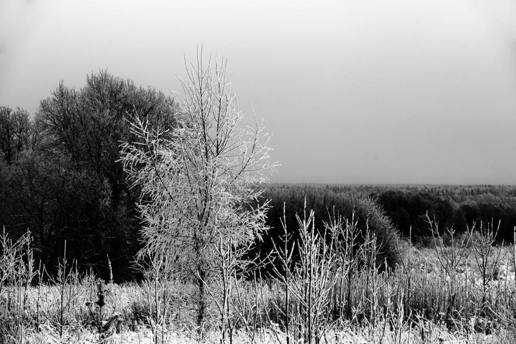 Граница города и леса, г. Владимир 09