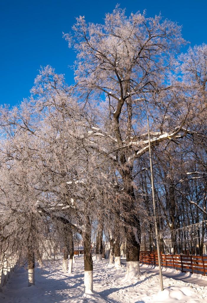Легкий январский мороз 03