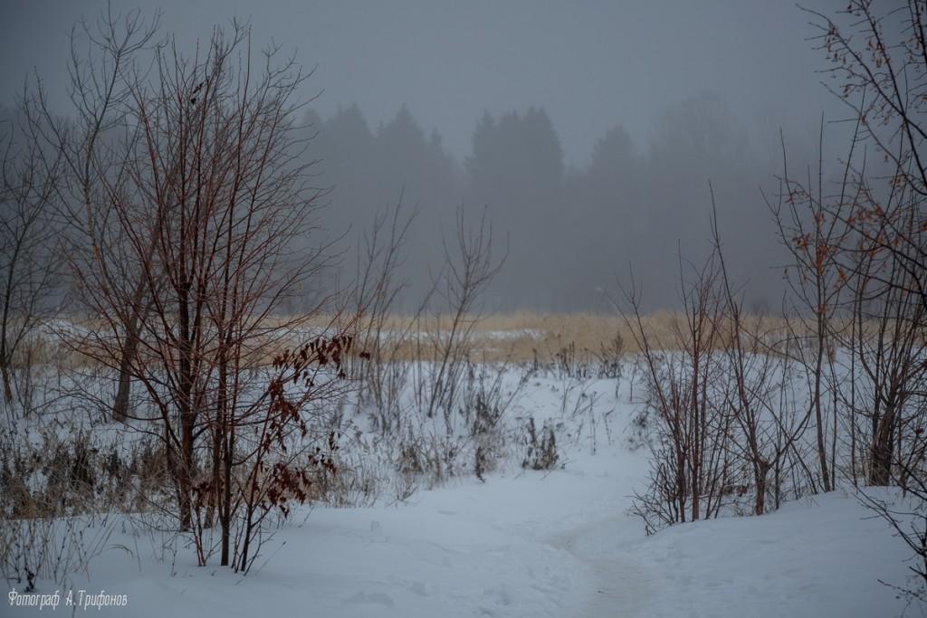 Тропинка в городском парке туманным утром. Муром, февраль 2019 02
