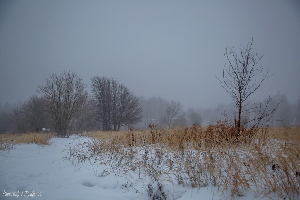 Тропинка в городском парке туманным утром. Муром, февраль 2019 03