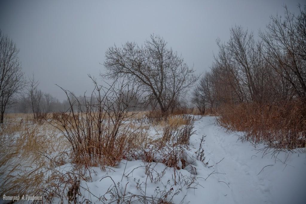 Тропинка в городском парке туманным утром. Муром, февраль 2019 04